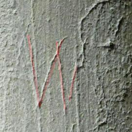 4.  Letter W (highlighted) &  other marks. North aisle pier.